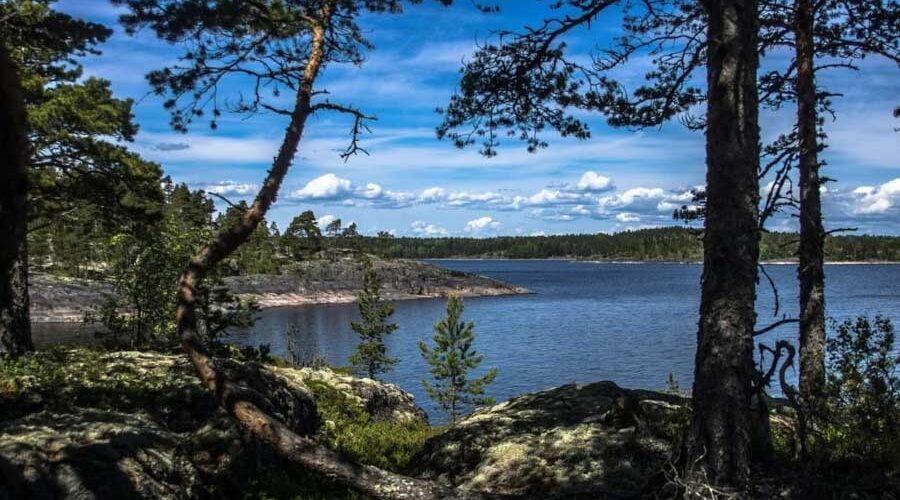 Lago Ladoga, circondato da foreste di pini - Carelia meridionale
